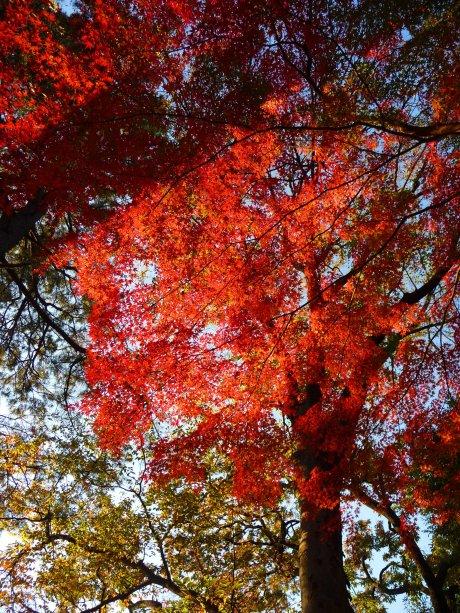 Horai Park 01