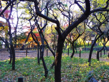 Horai Park 06
