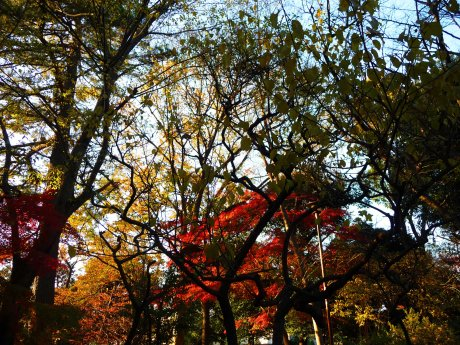 Horai Park 07
